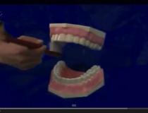 歯みがきお手本動画【自作】