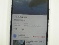 イルカについて知ろう。