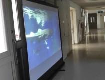 バーチャル水族館